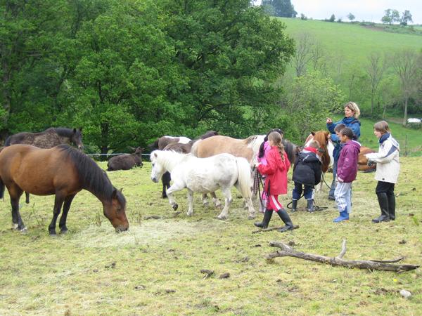Classe de découvertes, centre vacances, classe de campagne, équitation