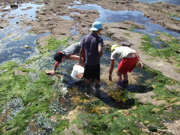 Classe de découvertes, centre vacances, classe de mer, pêche à pied