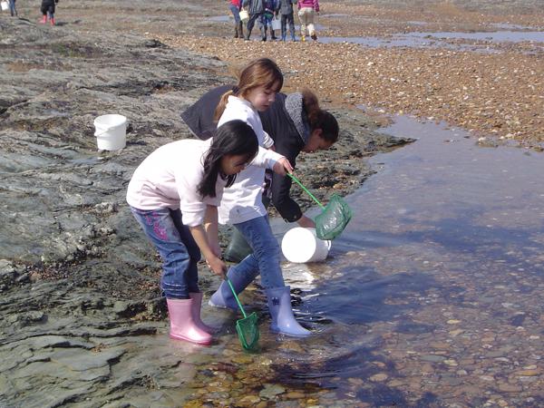 Classe de découvertes, centre vacances, classe de mer, saint Jean de Monts : pêche à pied