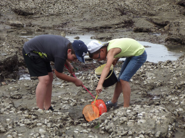 Colonie de vacances, séjours vacances, enfants, oul, Penestin : pêche à pied été 2017