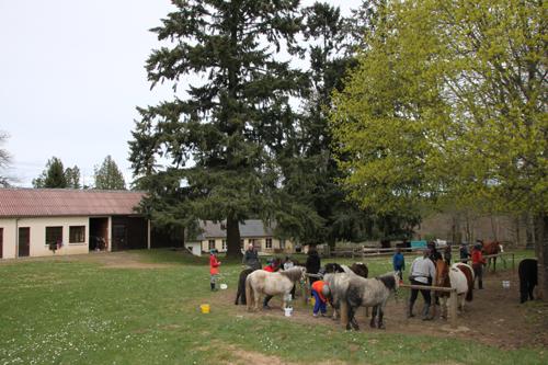 Classe de découvertes, centre vacances, classe de campagne, équitation 5
